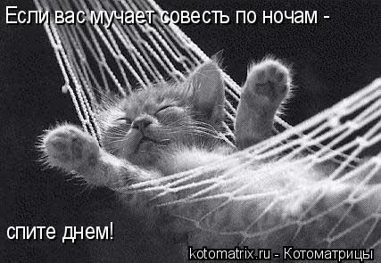 Котоматрица: Если вас мучает совесть по ночам -  спите днем!
