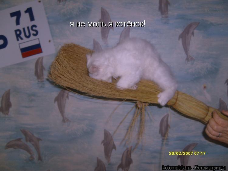 Котоматрица: я не моль,я котёнок!