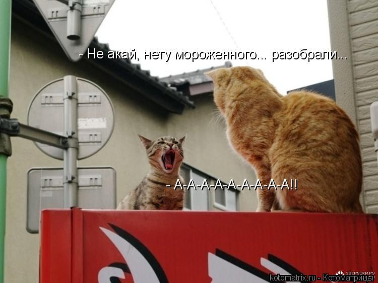 Котоматрица: - А-А-А-А-А-А-А-А-А!! - Не акай, нету мороженного... разобрали...