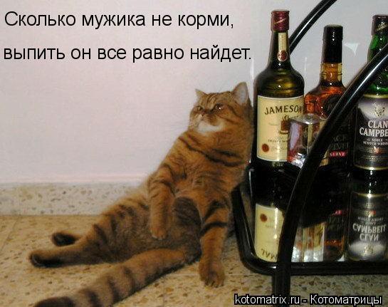 Котоматрица: Сколько мужика не корми,  выпить он все равно найдет.