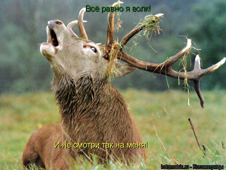 Котоматрица: Всё равно я волк! И не смотри так на меня!