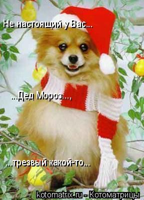 Котоматрица: Не настоящий у Вас... ...Дед Мороз..., ...трезвый какой-то...