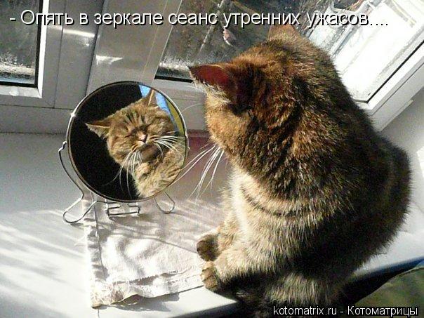 Котоматрица: - Опять в зеркале сеанс утренних ужасов....