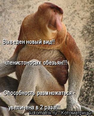 Котоматрица: Выведен новый вид!! членистоносых обезьян!!! Способность размножаться -  увеличена в 2 раза!!!