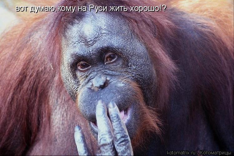 Котоматрица: вот думаю,кому на Руси жить хорошо!?