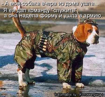 """Котоматрица: - А моя собака вчера из дома ушла...   Я ей дал команду """"служить"""",  а она надела форму и ушла в армию."""