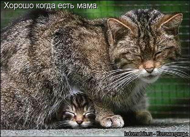 Котоматрица: Хорошо когда есть мама.