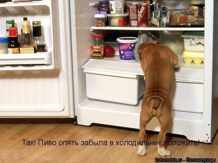 Котоматрица: Так! Пиво опять забыла в холодильник положить!