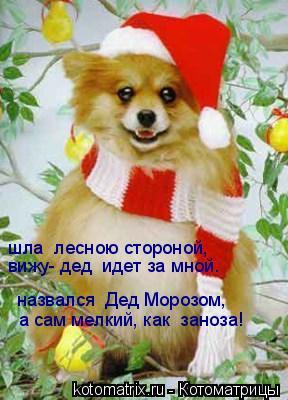 Котоматрица: шла  лесною стороной, вижу- дед  идет за мной. назвался  Дед Морозом, а сам мелкий, как  заноза!
