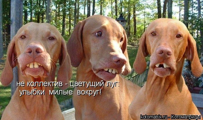 Котоматрица: не коллектив - цветущий луг: улыбки  милые  вокруг!