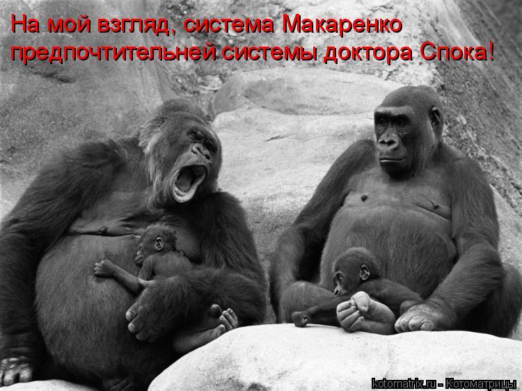 Котоматрица: На мой взгляд, система Макаренко предпочтительней системы доктора Спока!