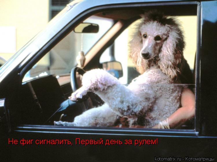 Котоматрица: Не фиг сигналить, Первый день за рулем!