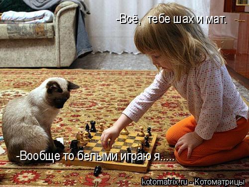 Котоматрица: -Всё,  тебе шах и мат. -Вообще то белыми играю я.....