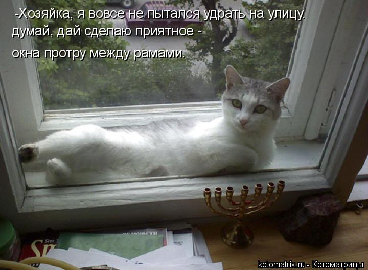 Котоматрица: -Хозяйка, я вовсе не пытался удрать на улицу. думай, дай сделаю приятное -  окна протру между рамами.