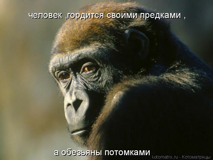 Котоматрица: человек ,гордится своими предками , а обезьяны потомками