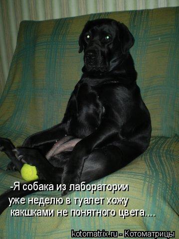 Котоматрица: -Я собака из лаборатории уже неделю в туалет хожу какшками не понятного цвета....