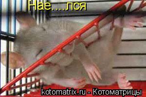 Котоматрица: Нае....лся