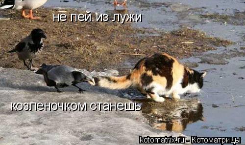 Котоматрица: не пей из лужи козленочком станешь