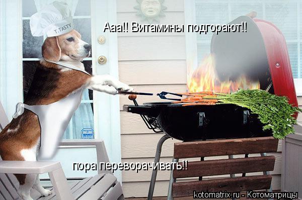Котоматрица: Ааа!! Витамины подгорают!! пора переворачивать!!