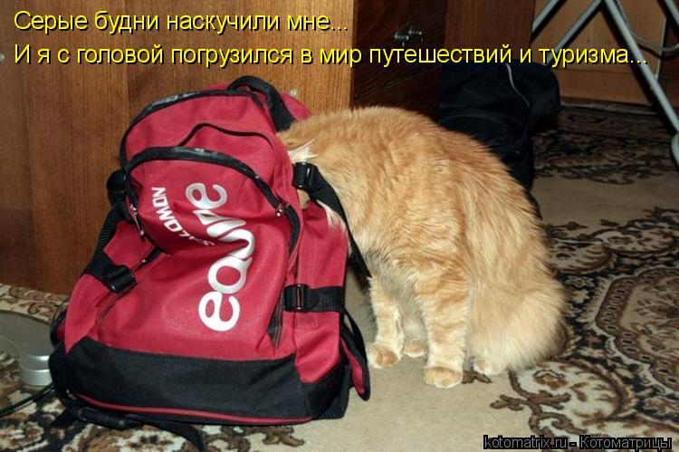 Котоматрица: Серые будни наскучили мне... И я с головой погрузился в мир путешествий и туризма...