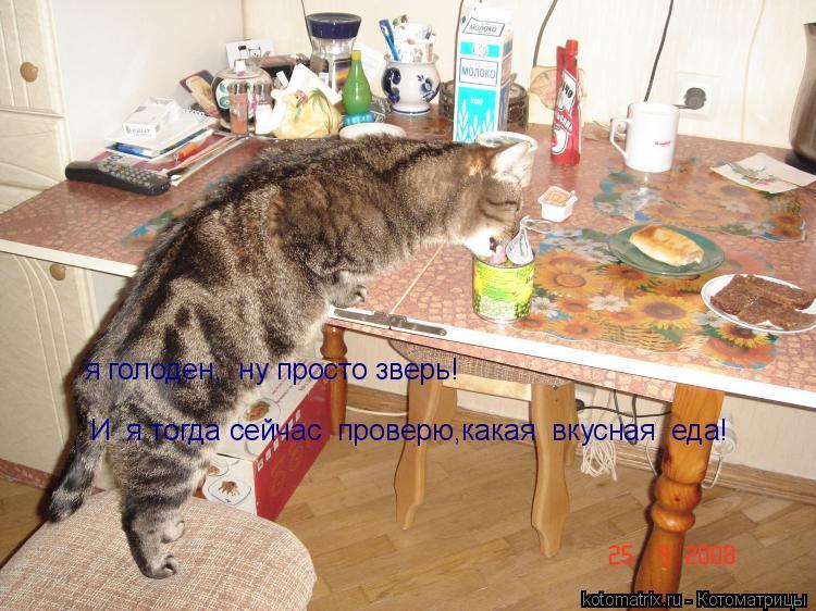 Котоматрица: я голоден,  ну просто зверь! И  я тогда сейчас  проверю,какая  вкусная  еда!