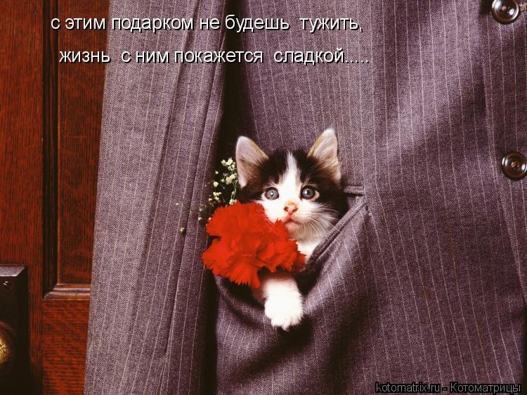 Котоматрица: с этим подарком не будешь  тужить, жизнь  с ним покажется  сладкой.....