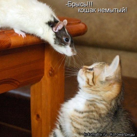 Котоматрица: -Брысь!!! кошак немытый!