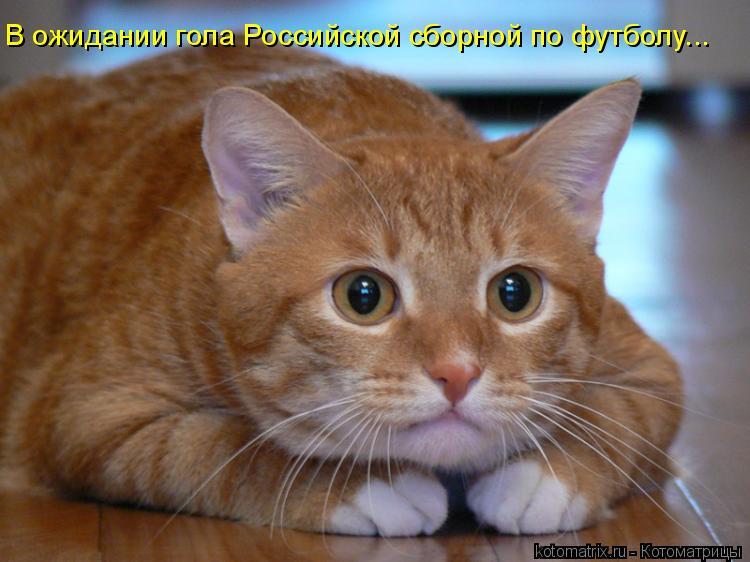 Котоматрица: В ожидании гола Российской сборной по футболу...