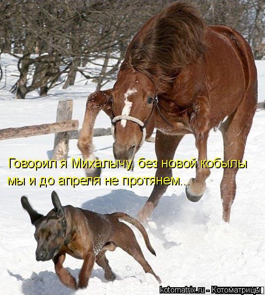 Котоматрица: Говорил я Михалычу, без новой кобылы мы и до апреля не протянем...