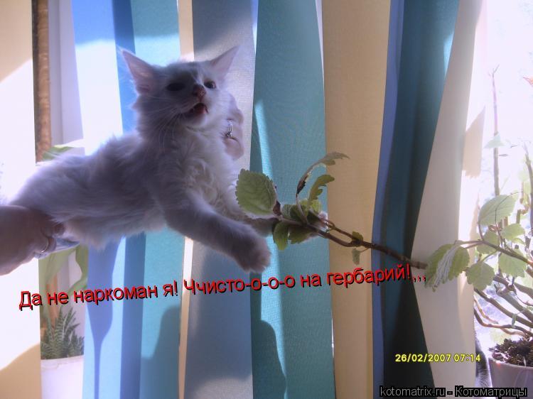 Котоматрица: Да не наркоман я! Ччисто-о-о-о на гербарий!,,,