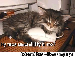 Котоматрица: Ну твоя мышь!! Ну и что?