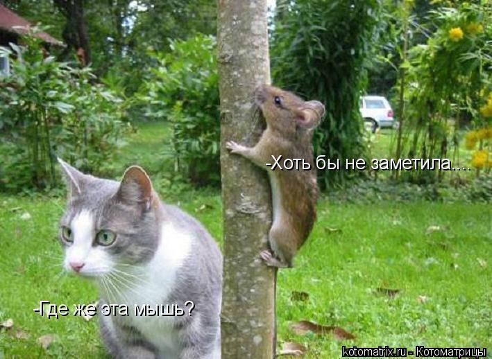 Котоматрица: -Где же эта мышь? -Хоть бы не заметила....