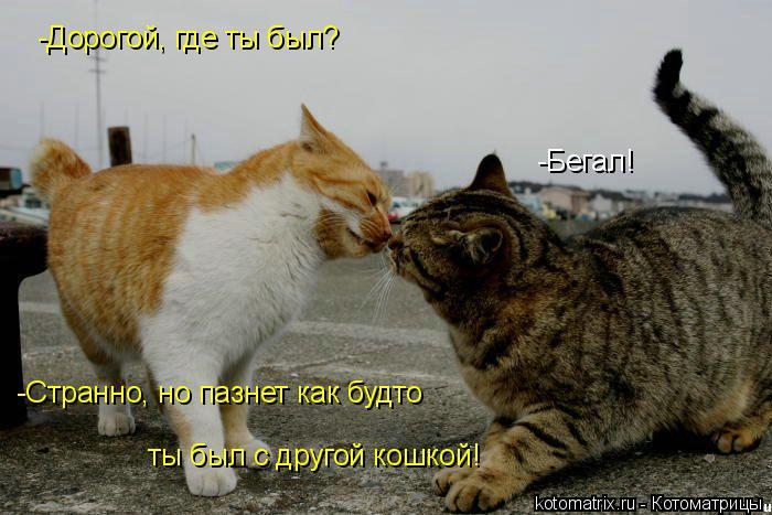 Котоматрица: -Дорогой, где ты был? -Бегал! -Странно, но пазнет как будто ты был с другой кошкой!