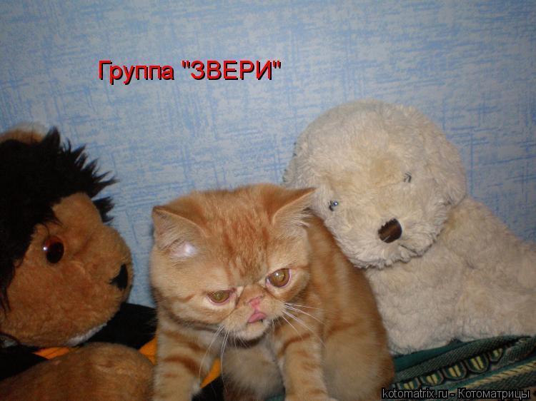 """Котоматрица: Группа """"ЗВЕРИ"""""""