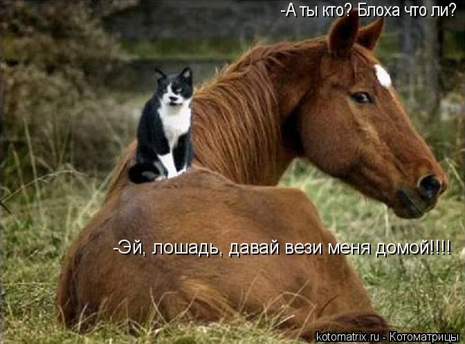 Котоматрица: -А ты кто? Блоха что ли? -Эй, лошадь, давай вези меня домой!!!!
