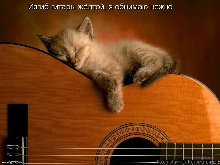 Котоматрица: Изгиб гитары жёлтой, я обнимаю нежно