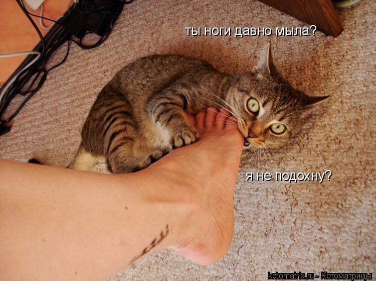 Котоматрица: ты ноги давно мыла? я не подохну?