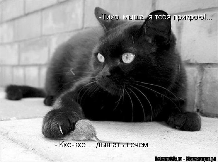 Котоматрица: -Тихо, мыша, я тебя прикрою!... - Кхе-кхе.... дышать нечем....