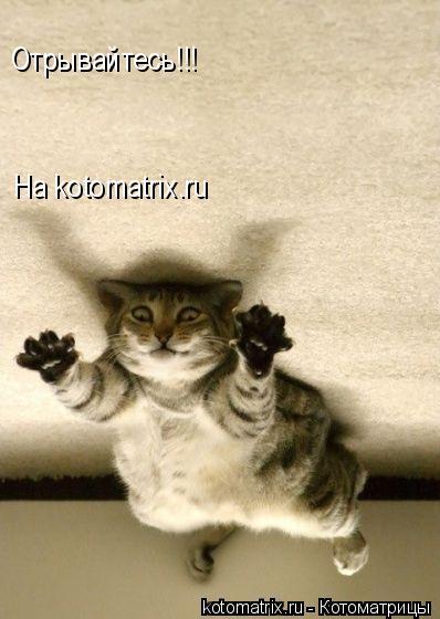 Котоматрица: Отрывайтесь!!! На kotomatrix.ru