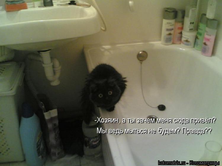 Котоматрица: -Хозяин, а ты зачем меня сюда привёл? Мы ведь мыться не будем? Правда??