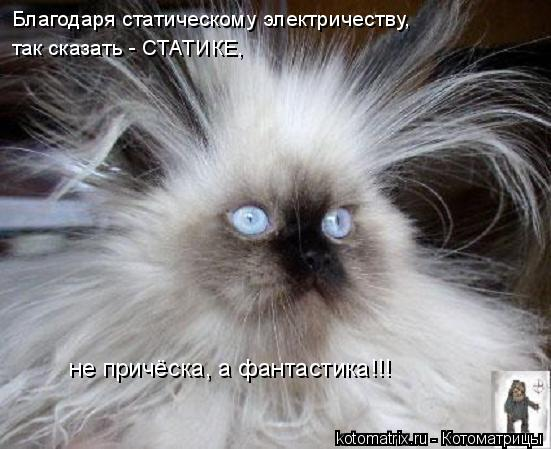Котоматрица: Благодаря статическому электричеству,  так сказать - СТАТИКЕ, не причёска, а фантастика!!!