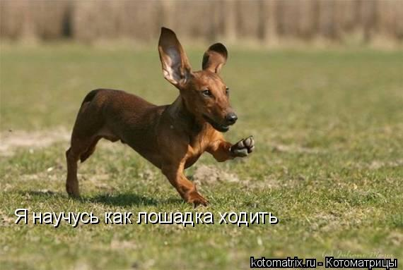 Котоматрица: Я научусь как лошадка ходить