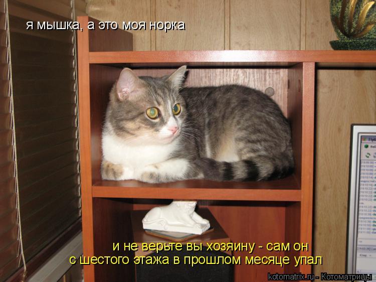 Котоматрица: я мышка, а это моя норка и не верьте вы хозяину - сам он  с шестого этажа в прошлом месяце упал