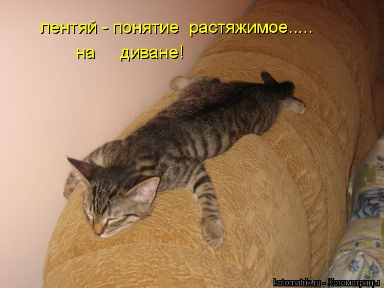Котоматрица: лентяй - понятие  растяжимое..... на     диване!
