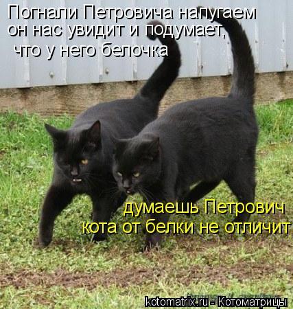 Котоматрица: Погнали Петровича напугаем он нас увидит и подумает,  что у него белочка думаешь Петрович  кота от белки не отличит