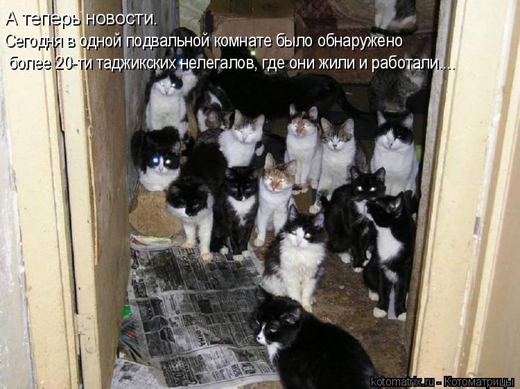 Котоматрица: А теперь новости. Сегодня в одной подвальной комнате было обнаружено более 20-ти таджикских нелегалов, где они жили и работали....
