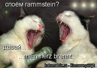 Котоматрица: споём rammstein? давай... ...mein herz brennt