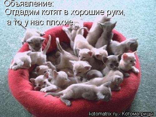 Котоматрица: Объявление: Отдадим котят в хорошие руки,  а то у нас плохие.