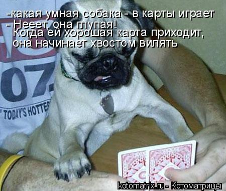 Котоматрица: -какая умная собака - в карты играет - Нееет, она глупая! Когда ей хорошая карта приходит, она начинает хвостом вилять