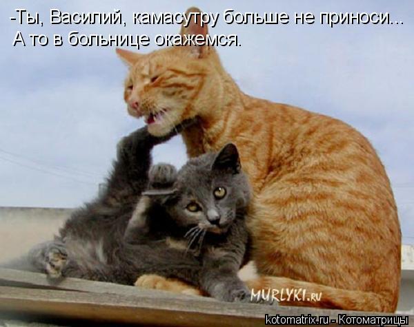Котоматрица: -Ты, Василий, камасутру больше не приноси... А то в больнице окажемся.